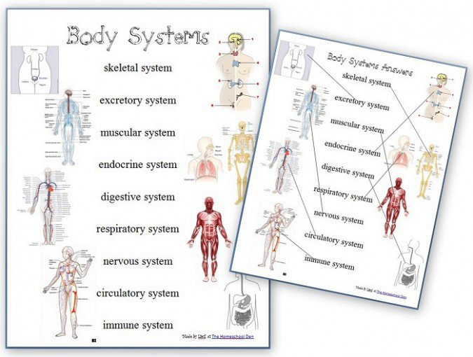 Body Systems Worksheets Elementary