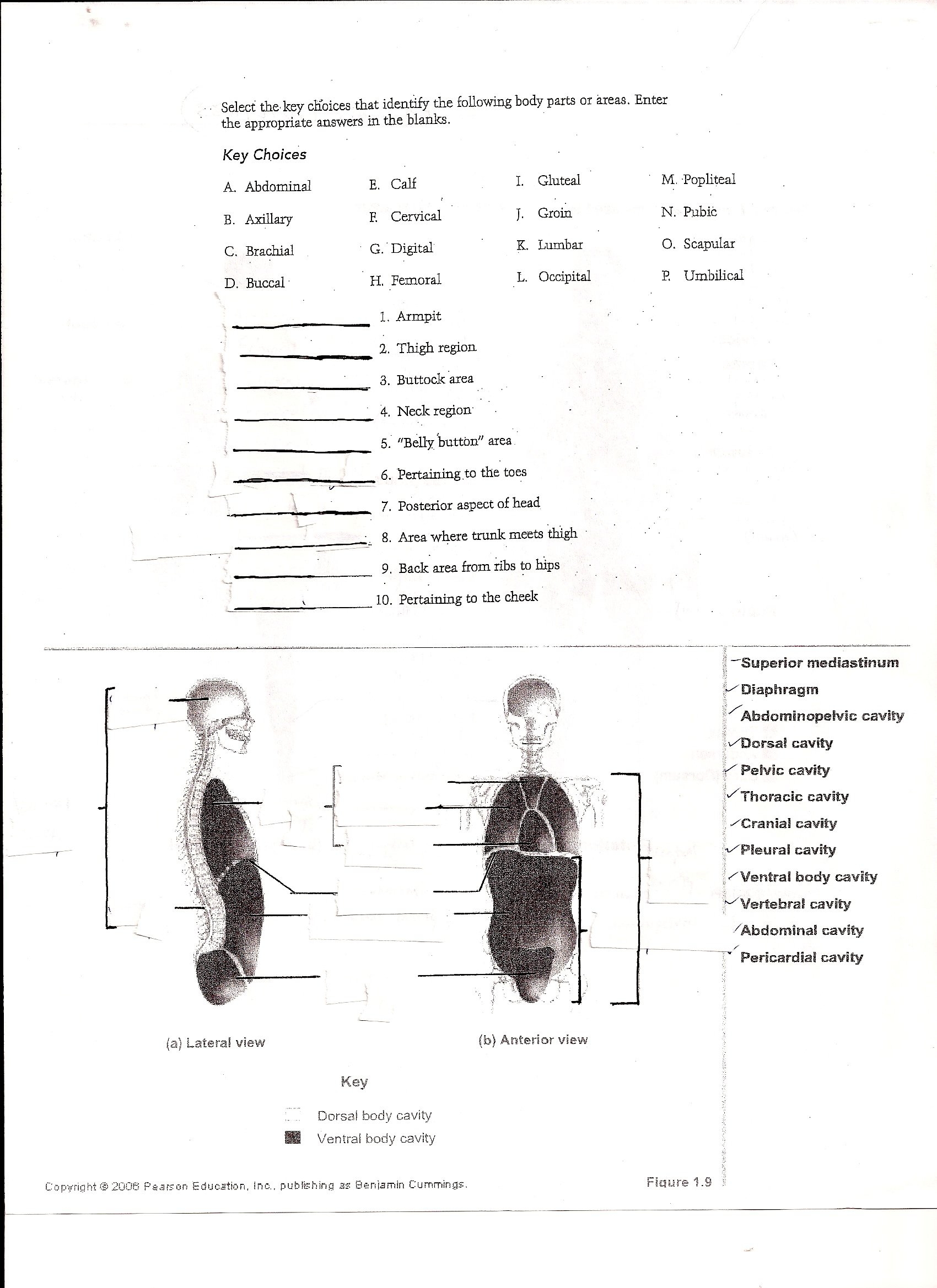 Brilliant Ideas Of Anatomy And Physiology Worksheets Also Letter