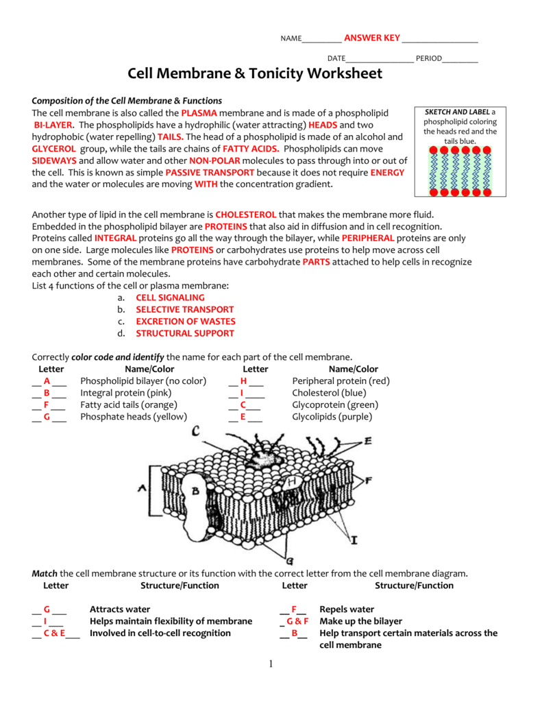 Cell Membrane And Tonicity Worksheet Answers The Best Worksheets