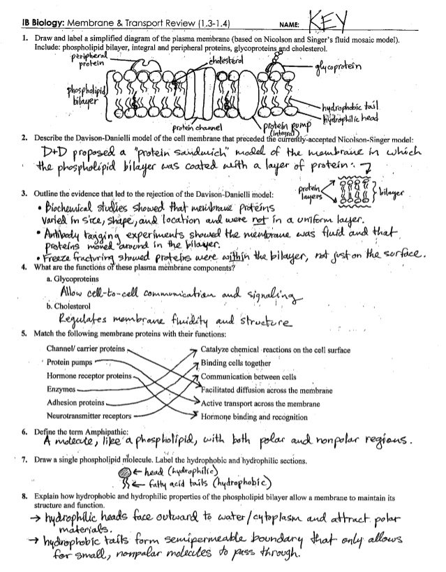 Cell Membrane Images Worksheet