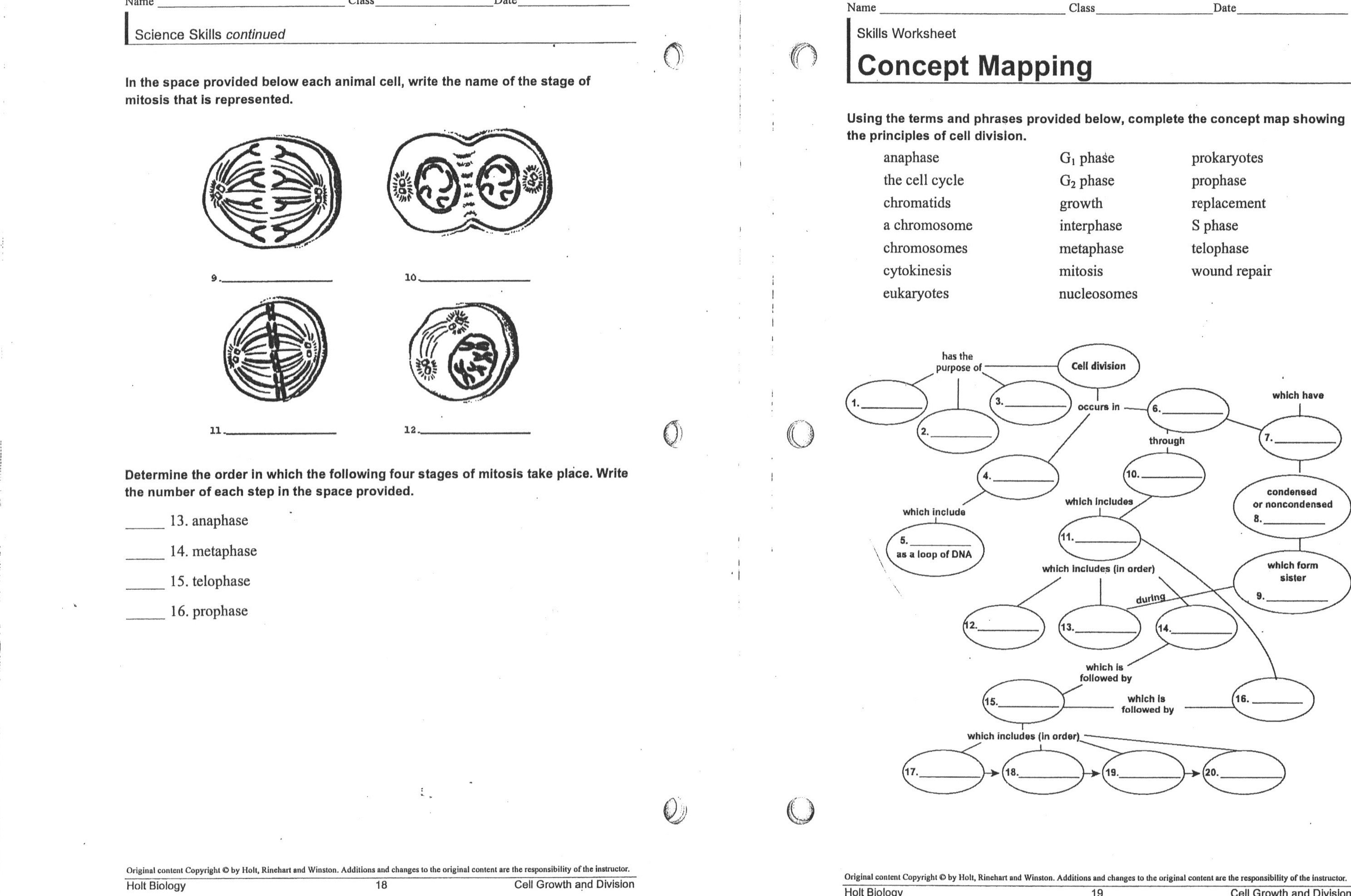 Cell Worksheets For High School The Best Worksheets Image