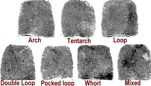 Comparing Fingerprints Worksheet Worksheets For All