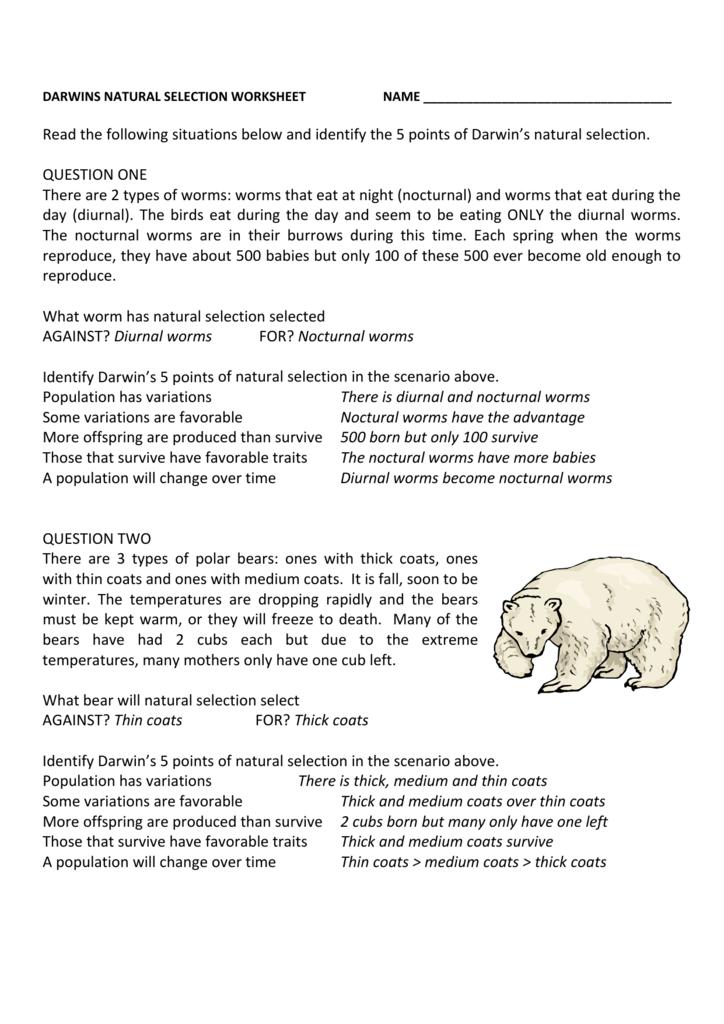 Darwin's Natural Selection Worksheet Darwins Natural Selection