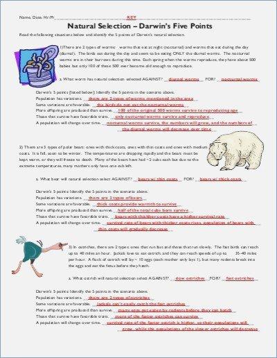 Darwin's Natural Selection Worksheet Natural Selection Worksheet