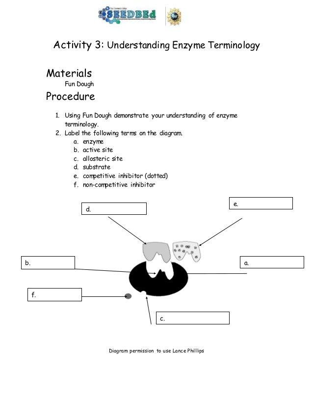 Enzymes Worksheet Enzyme