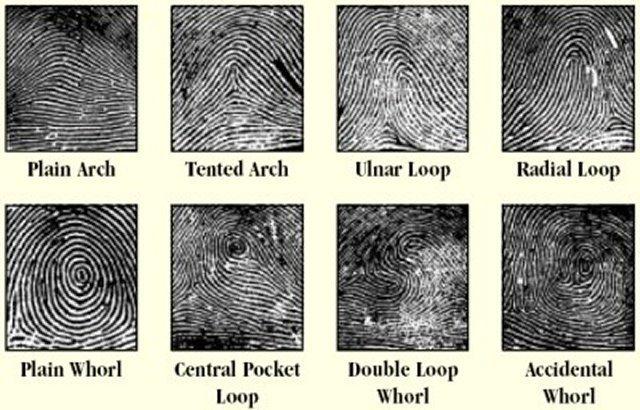 Fingerprint Identification