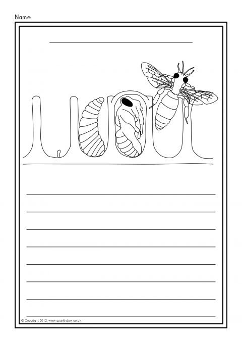 Honey Bee Life Cycle Colour And Write Worksheets (sb8455)
