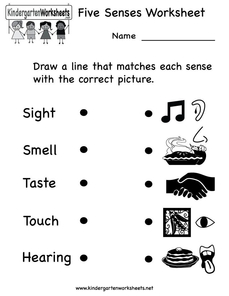 Kindergarten Scienceksheets Five Senses Math Craftsactvities And