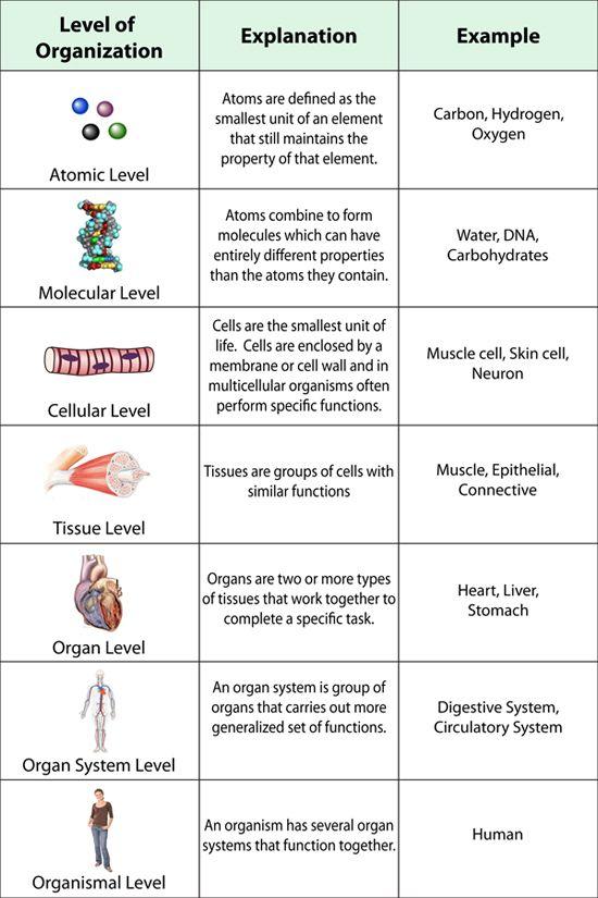 Levels Of Organization Worksheet Worksheets For All