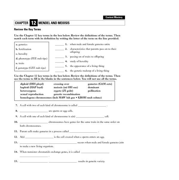 Meiosis Worksheet Answers Chapter 10 Mendel And Meiosis Worksheet