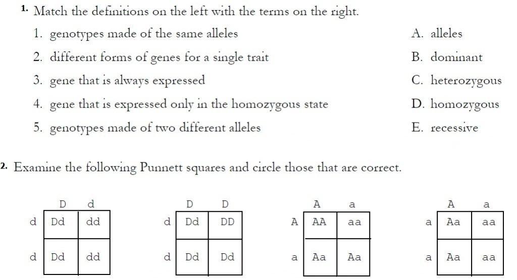 Monohybrid Cross Worksheet 9 Monohybrid Crosses Worksheet