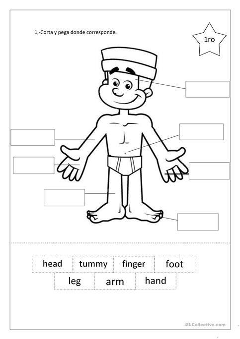 My Body Worksheet