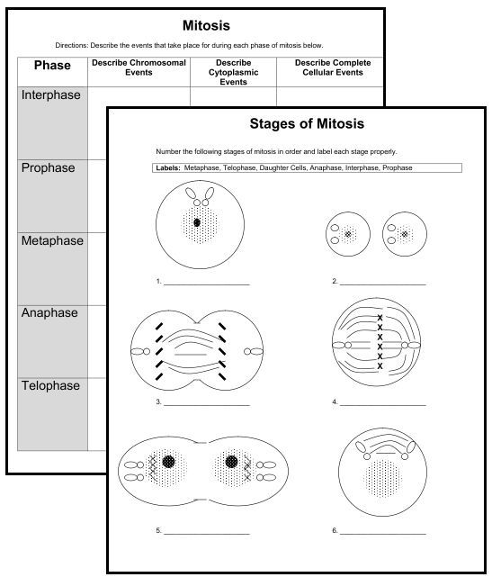 New Downloads  (2) Cell Organelle Quizzes & (2) Mitosis Worksheets