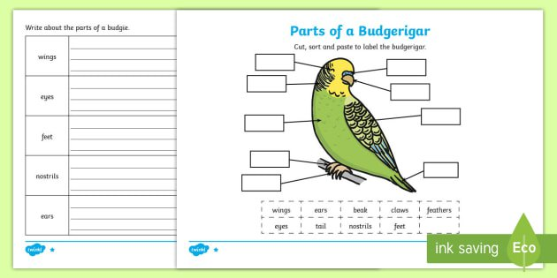 Parts Of A Budgie Differentiated Worksheet   Activity Sheets