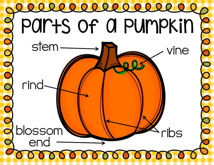Parts Of A Pumpkin Worksheet The Best Worksheets Image Collection