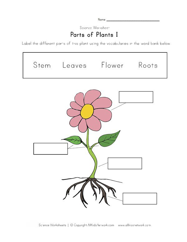 Parts Of Plants Worksheet