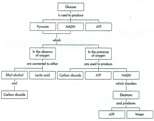 Photosynthesis Diagram Worksheet Answer Key Worksheets For All