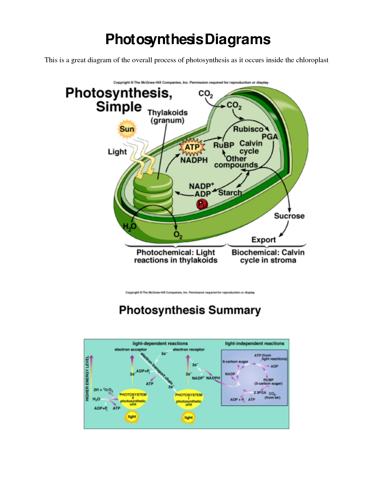 Photosynthesis Diagrams Worksheet Answer Key The Best Worksheets
