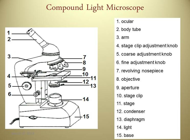 Light Microscope Worksheets. Sb13c Microscope Labeling Worksheet Worksheets Kristawiltbank Free. Worksheet. Pound Light Microscope Worksheet At Clickcart.co