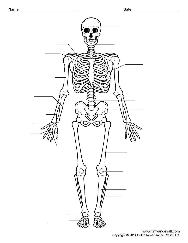 Skeleton Worksheet The Human Our Bodies