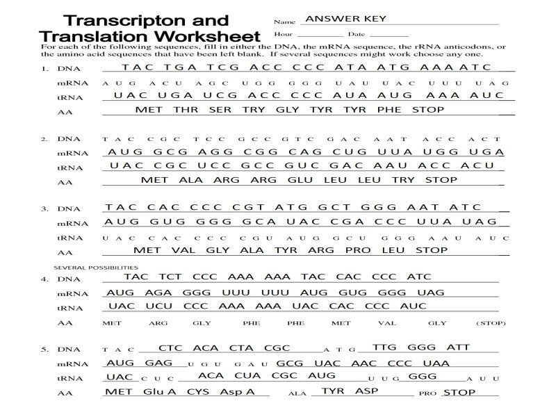 Transcription And Translation Worksheet Answers 13 Awesome Stock