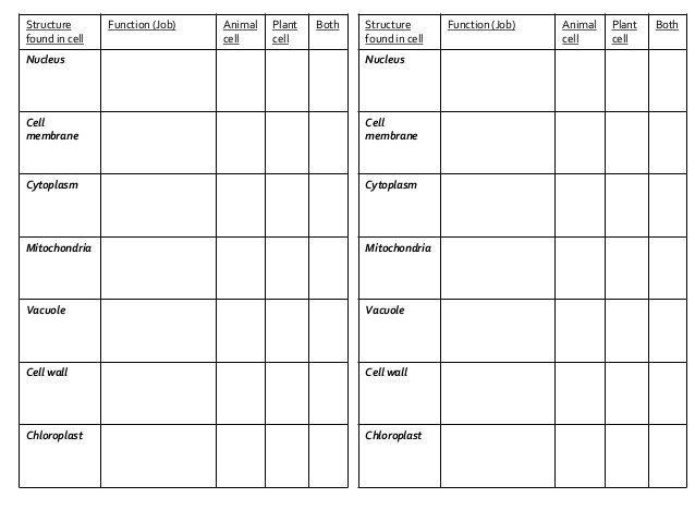 Plant Cell And Animal Cell Structures Worksheets