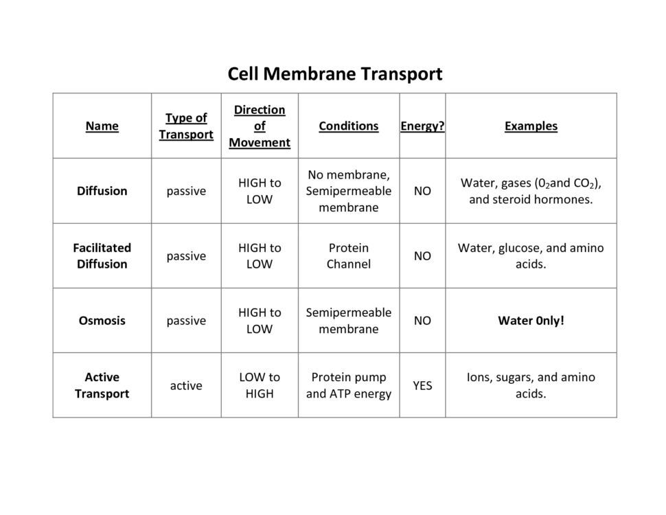 Worksheet Templates   Water Passes Quickly Through Cell Membranes