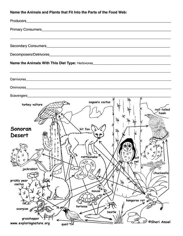 20 Fresh Food Web Worksheet Middle School Images
