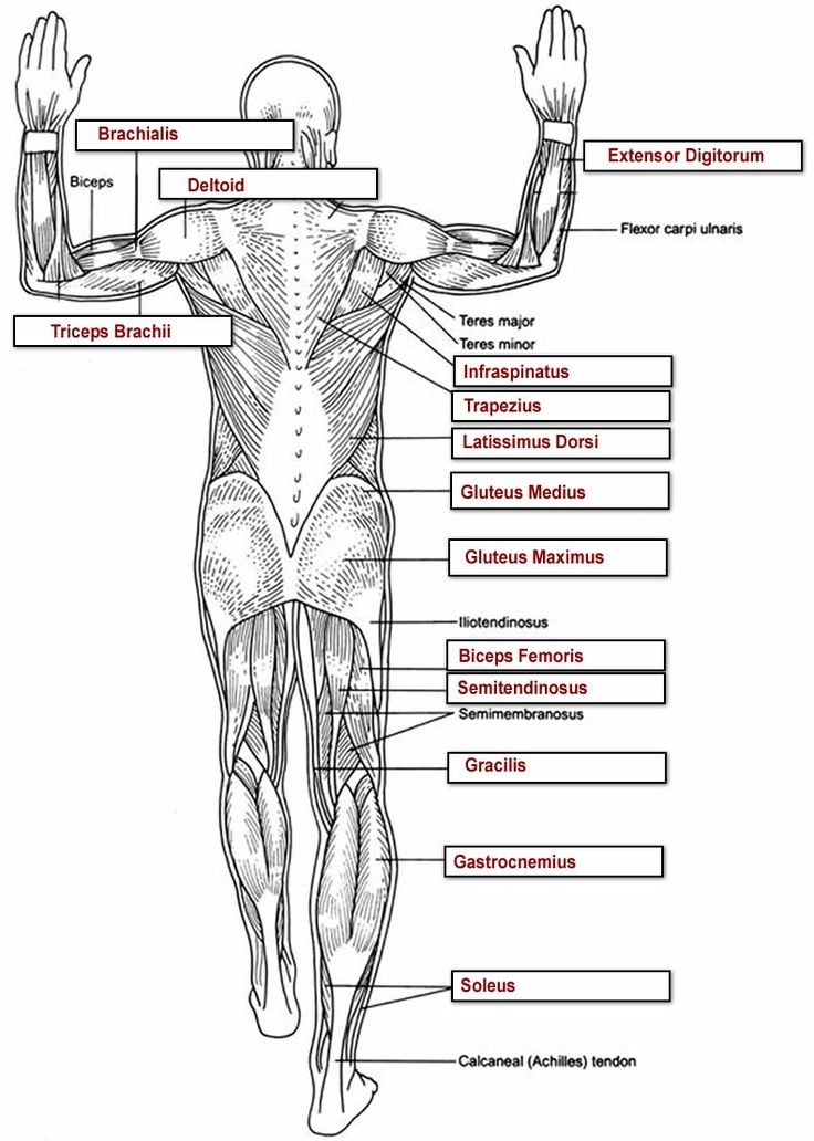 55 Unique Anatomy And Physiology Printable Worksheets