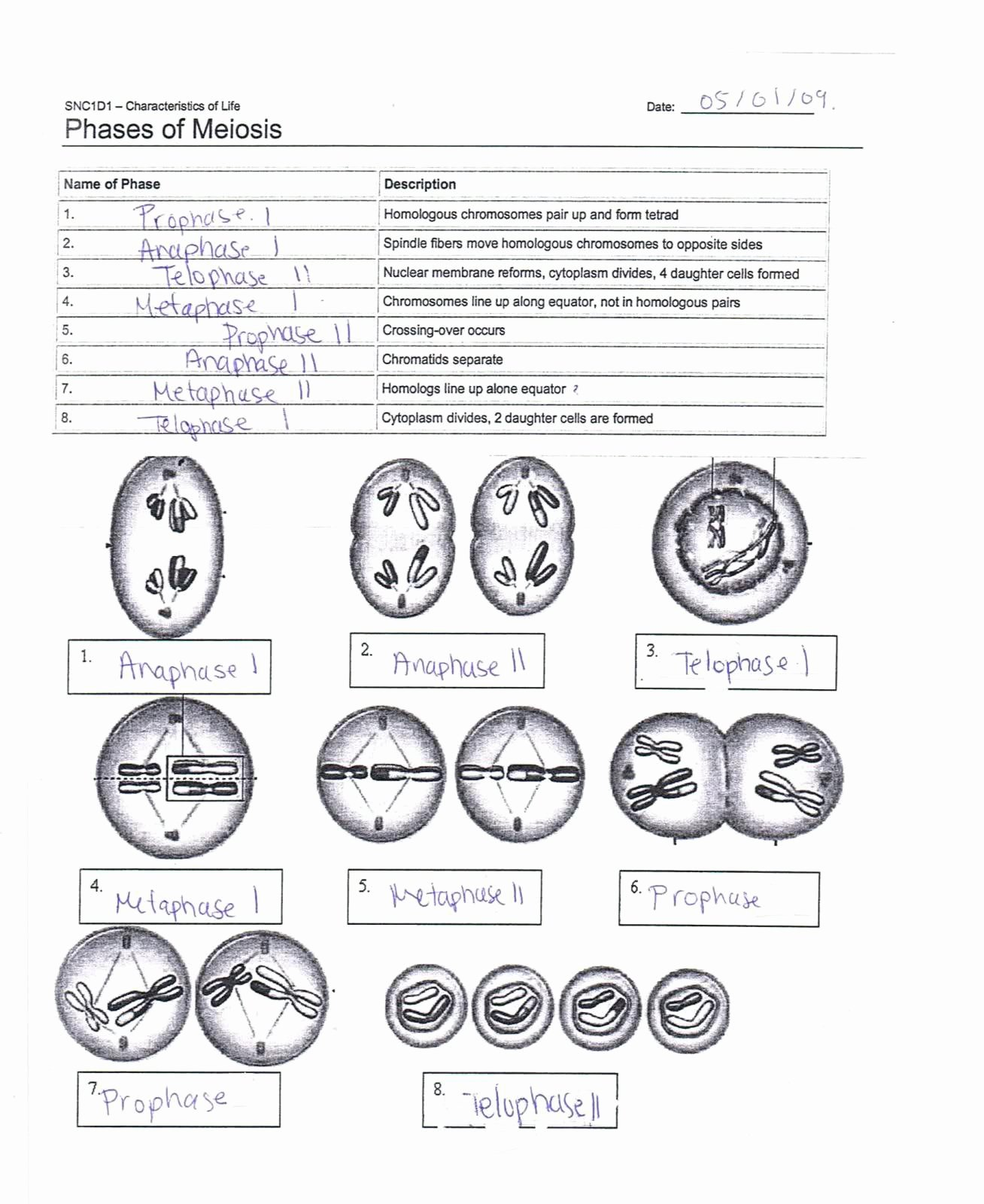 6 Last Meiosis Worksheet And Nondisjuction Answers