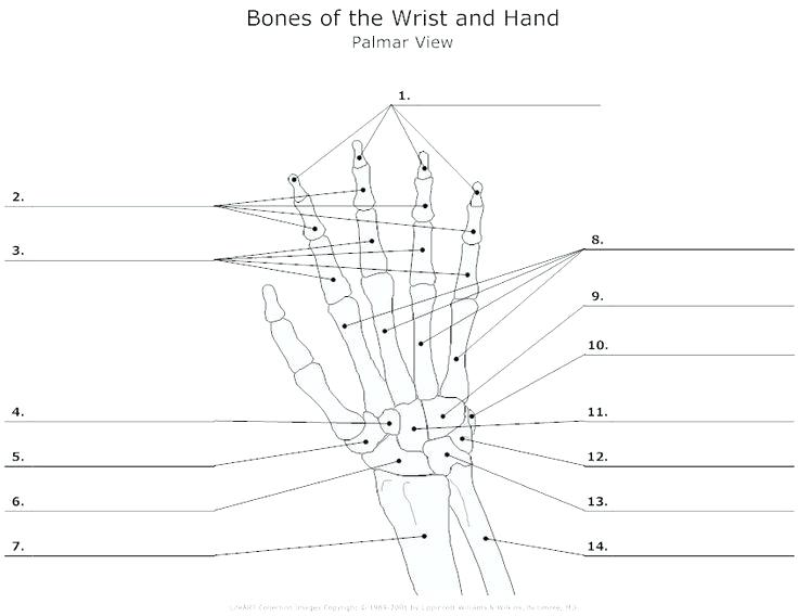 Printable Anatomy Labeling Worksheets