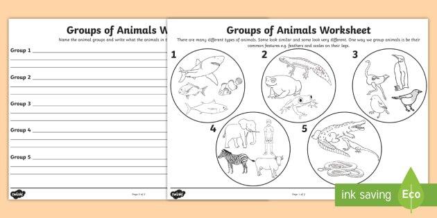 Animal Groups Worksheet