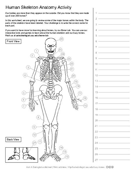 Bone Worksheets For Anatomy The Best Worksheets Image Collection