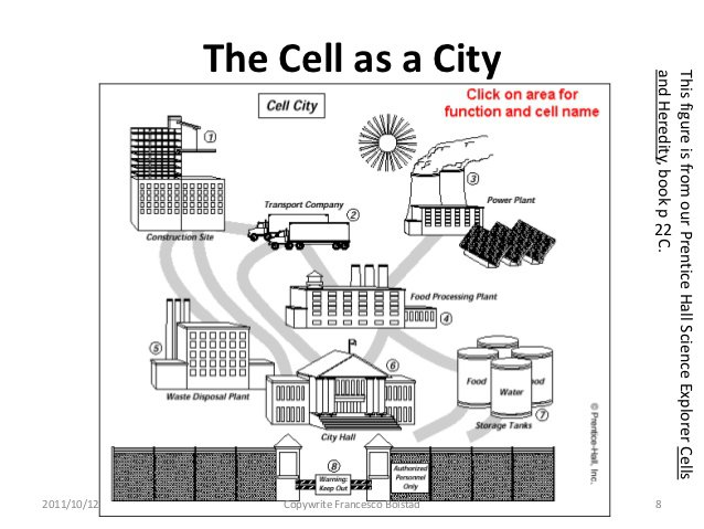Cell As A City Worksheet