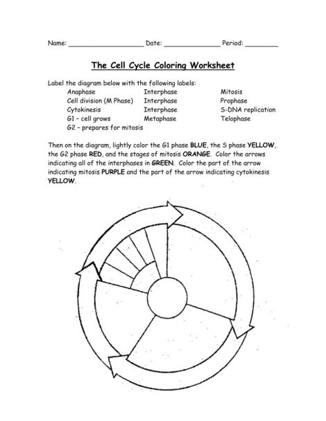 Cell Cycle Coloring Worksheet Answers Clever Crafts Free Worksheets Samples