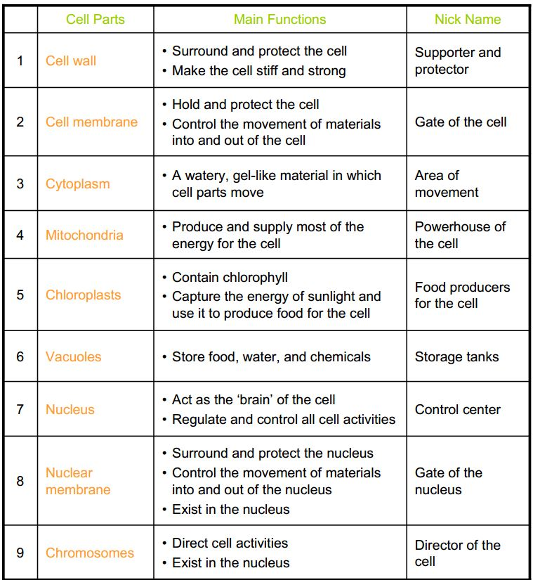 Cells And Their Organelles Worksheets Answers