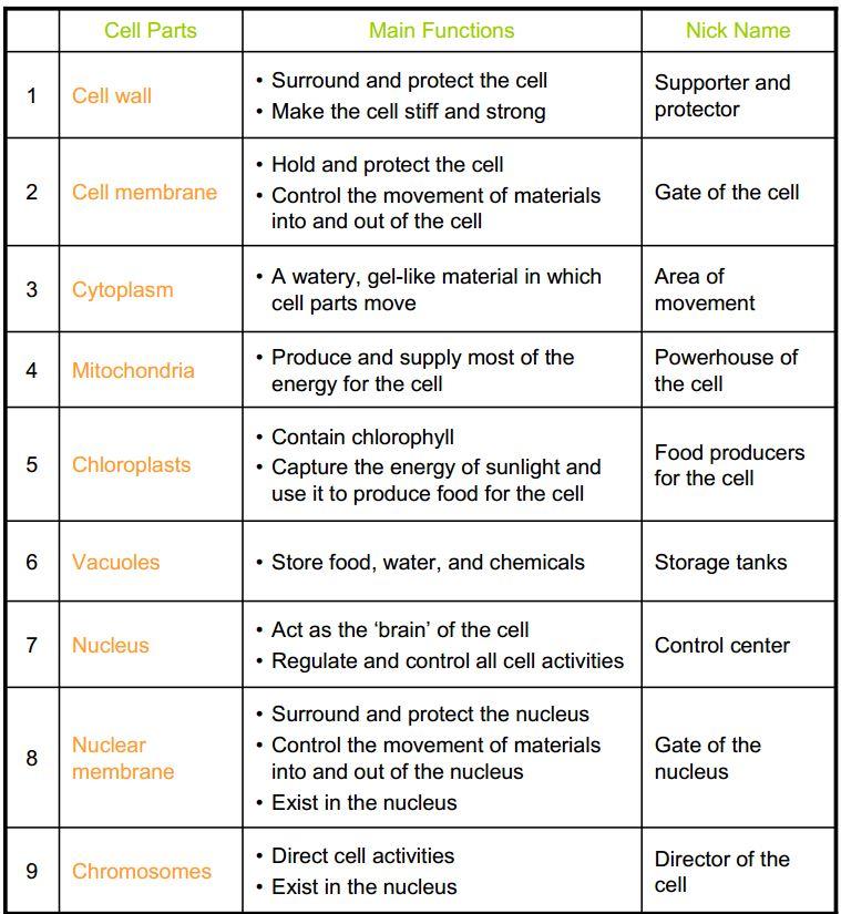 Cell Organelles Worksheet Answer Key Biology 397721