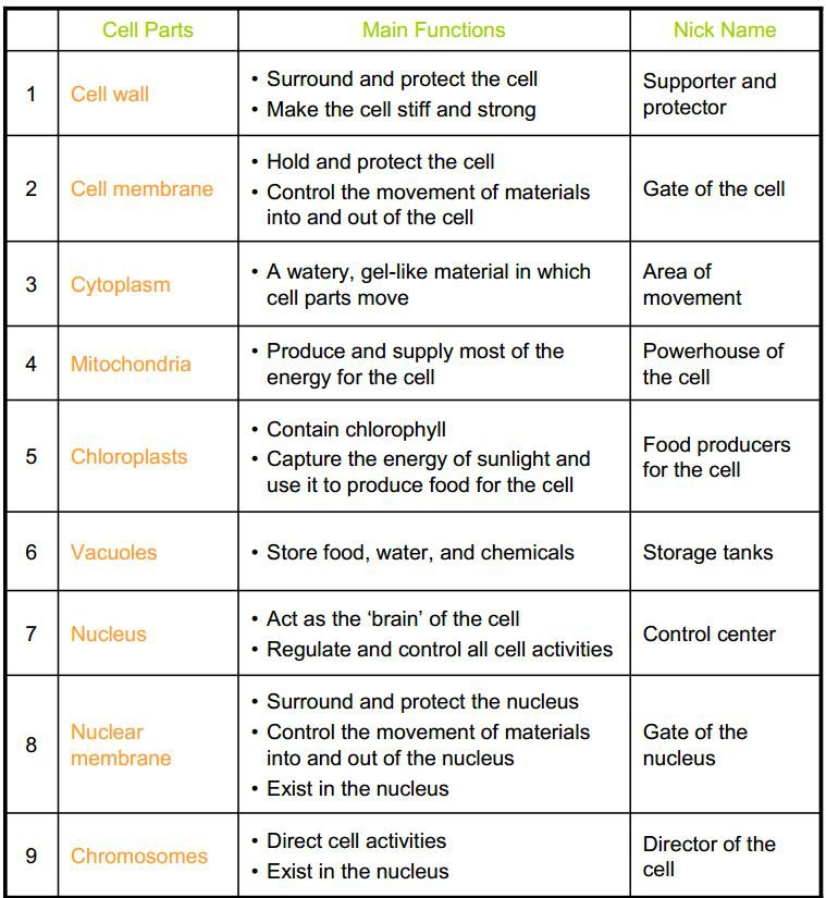 Cell Organelles Worksheet Answers Cell And Organelles Worksheet
