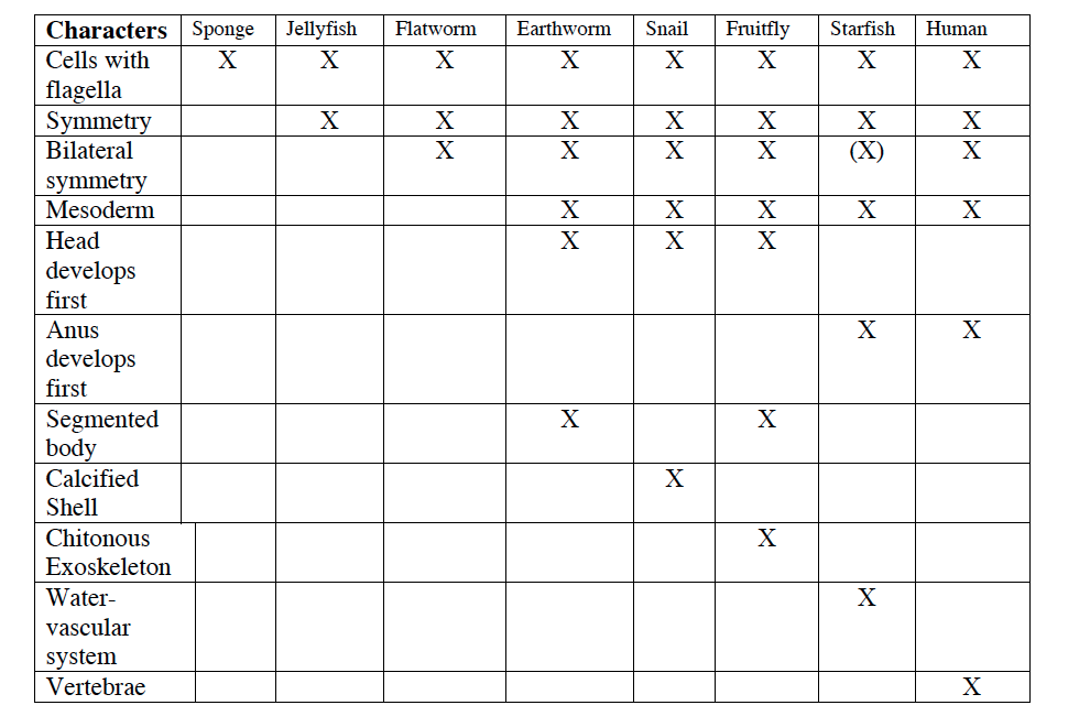 Cladogram Worksheets Answers