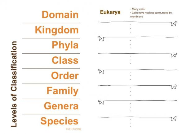Classification And Taxonomy Worksheet The Best Worksheets Image