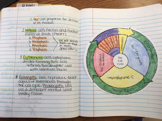 Coloring The Cell Cycle Worksheet