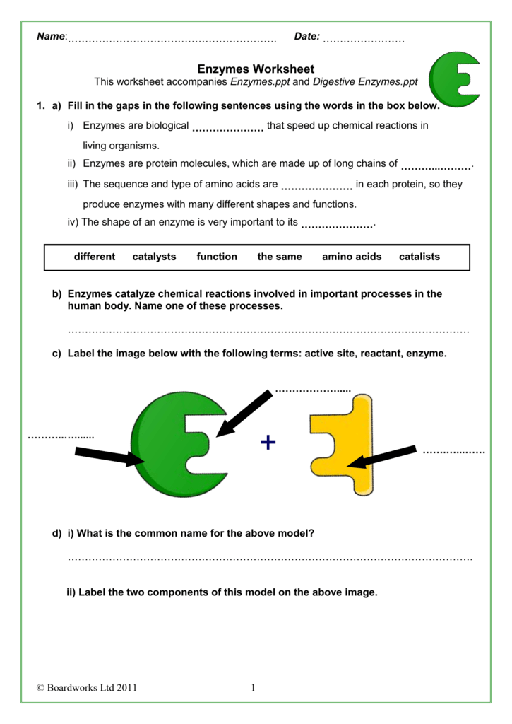 Enzymes Worksheets The Best Worksheets Image Collection