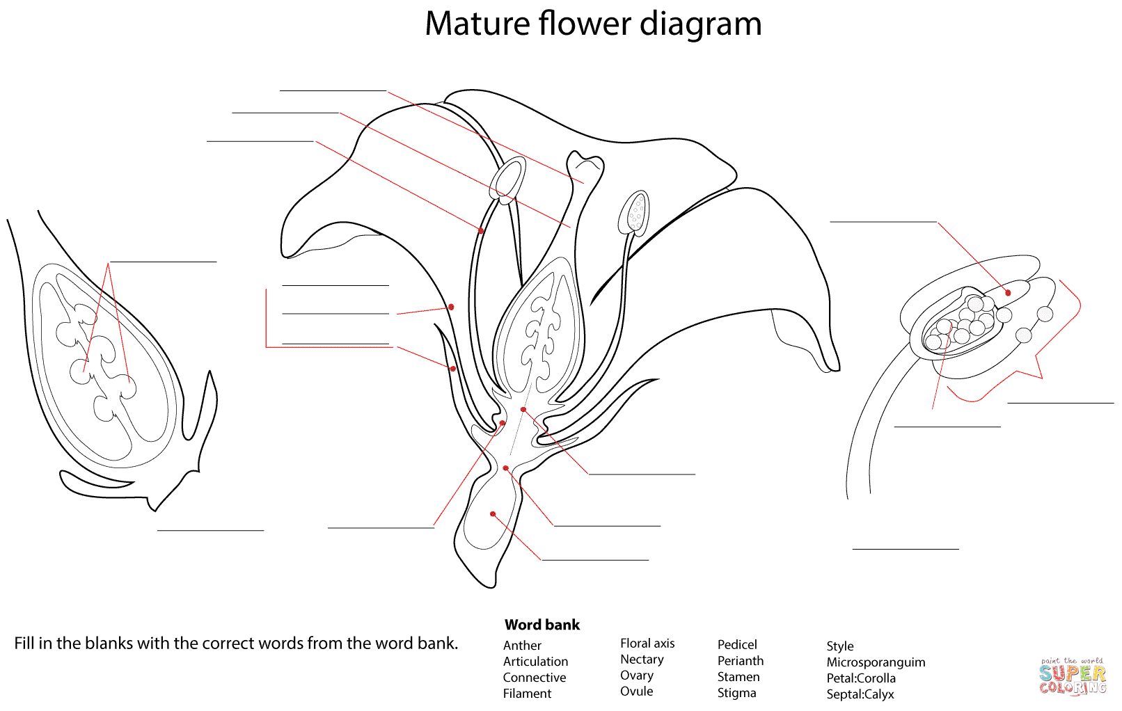Flower Anatomy Quiz At Best Anatomy Learn