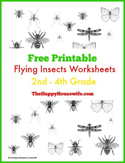 Flying Insects Worksheets  Free Printables