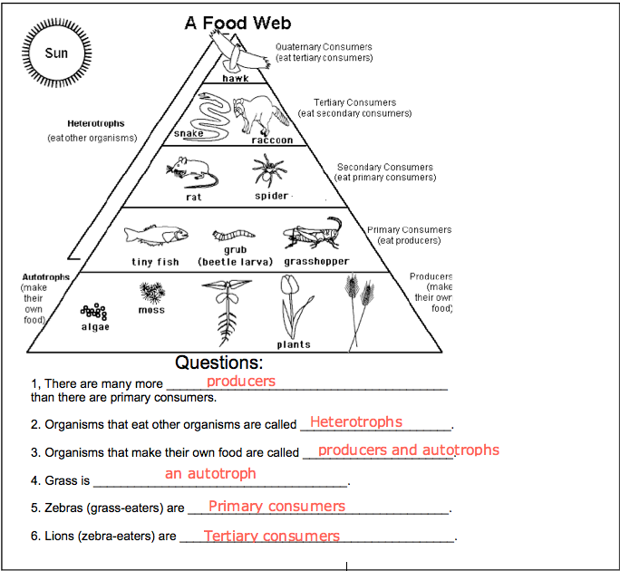 Food Web Worksheet And Answers Fresh Food Chains And Food Webs