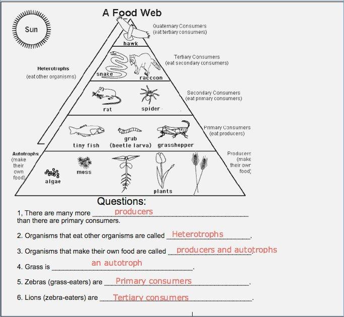 Food Web Worksheet Food Chains And Webs Worksheet Careless