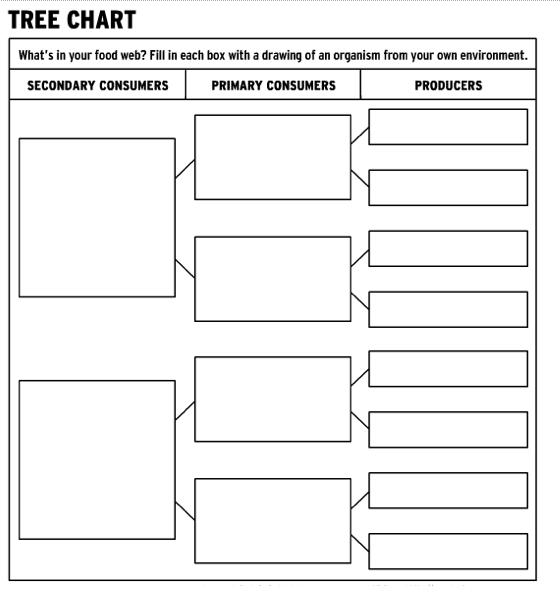 Food web worksheets high school ibookread PDF