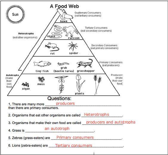 Food Web Worksheets  Worksheets  Whenjewswerefunny Free Printable
