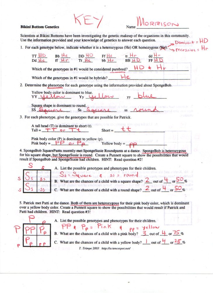 Genotype And Phenotype Worksheet Answers Images