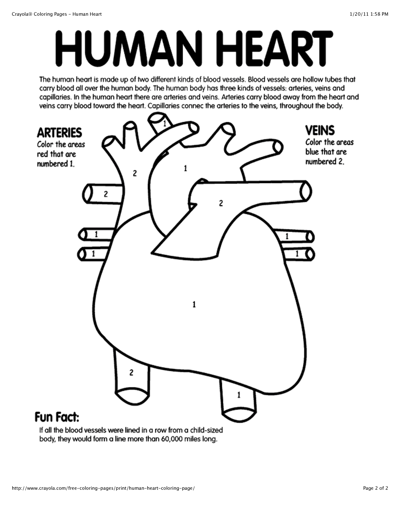Human Heart Worksheets The Best Worksheets Image Collection